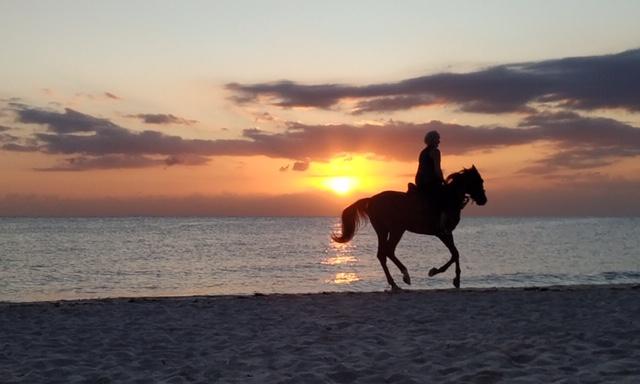 HorsebackRide